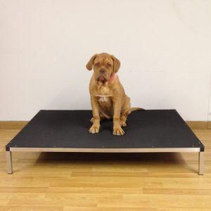 Raised Dog Beds 4